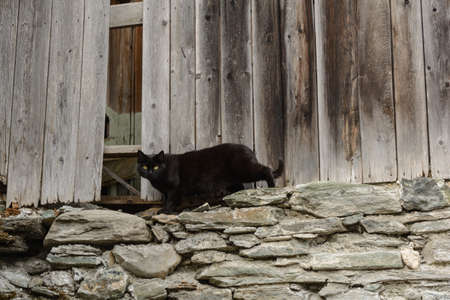 woodshed: black cat lurking in the old woodshed Stock Photo