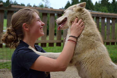 stockman: Husky playing with teenagers and be petted Stock Photo