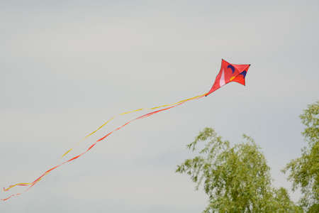 freetime activity: kite flying in the wind - funny adventure