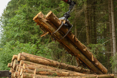 treetrunk: Bloch timber loading crane on timber transport - Forestry