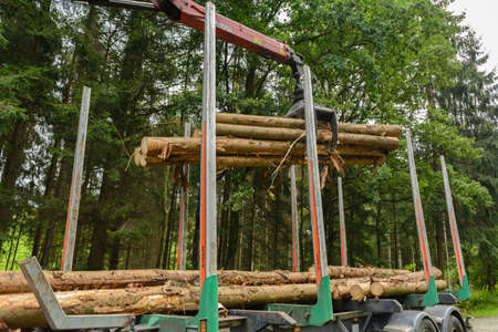 treetrunk: Crane logs are loaded onto timber transport - round wood Stock Photo