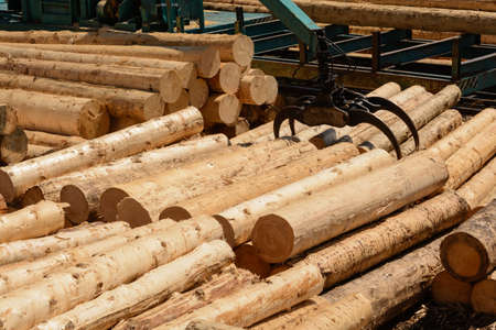 treetrunk: peeled round wood are sized with crane in a sawmill