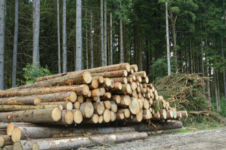 treetrunk: felled spruce trees wait stacked for pick - round wood