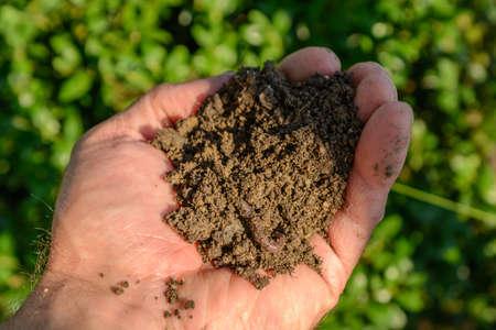 lombriz de tierra: Mano con tierra sana y una lombriz de tierra
