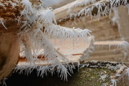 Hoarfrost and ice crystals on trimmed tree trunks