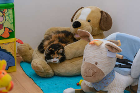 keeping room: Colorful domestic cat enjoys relaxing on a plush dog Stock Photo