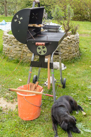 Meat is grilled on charcoal grill, dog guarded barbecue
