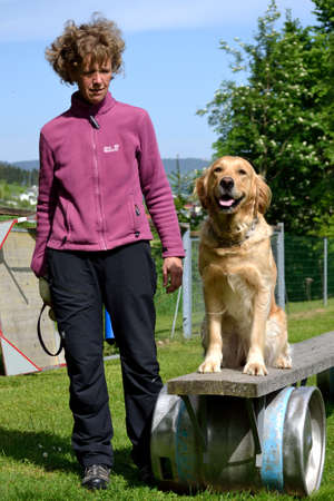 Rescue dog training - trainer with golden retriever on an obstacle