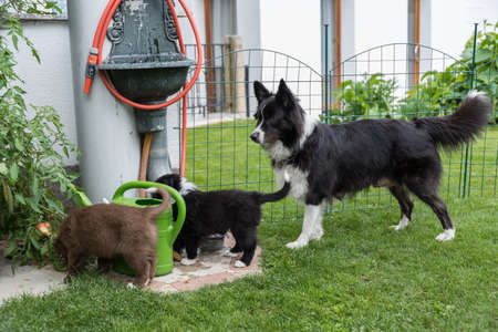 Purebred puppies explore the garden with their mother