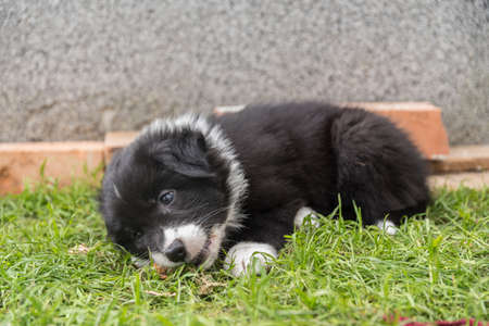 Puppy playing with a walnut in the grass Stock Photo