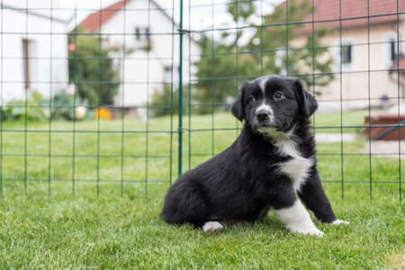 curious looking puppy sitting in the garden in the meadow