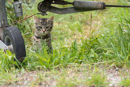 housecat: Catsbaby observes something in the meadow - cloeseup