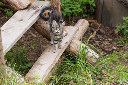 Kitten stretches and yawns on an old wooden staircase outdoor
