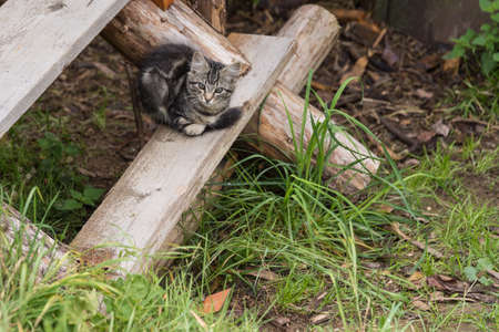 gray kitten sitting on a rustic wooden staircase in the open countryside