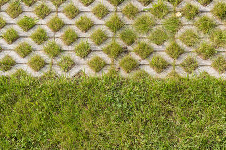 Lawns as a pattern and demarcation in the garden