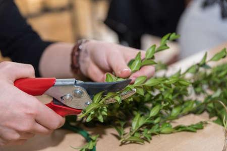 Florist cuts boxwood for arrangement with rose scissors