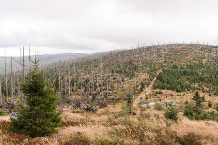 Nationaal park Beierse Woud - Bos sterft door aantasting door schorskevers Stockfoto - 91421358