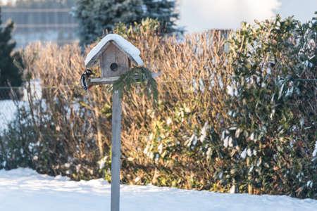 Blood woodpecker pecks from a birdhouse in winter forage