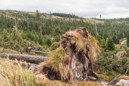 Trees uprooted from a forest after a storm