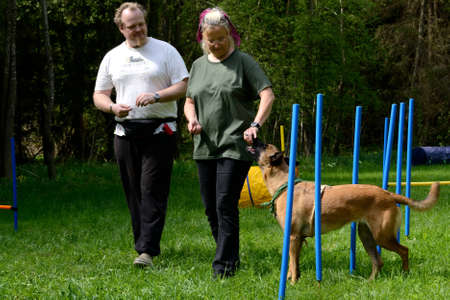 Therapy dog training with owners - obedience to slalom
