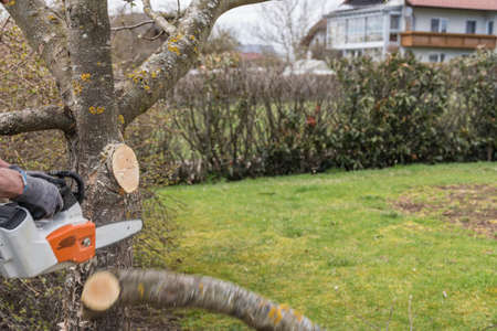 Gardener cuts out fruit tree with chainsaw - close-up