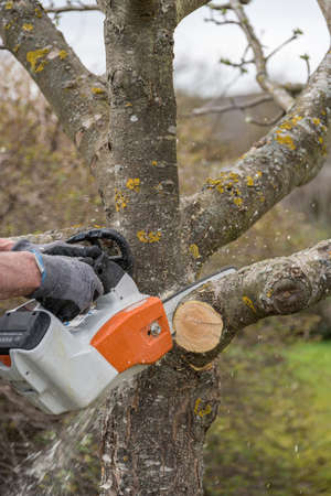 Gardener cuts out with chainsaw fruit tree - close-up