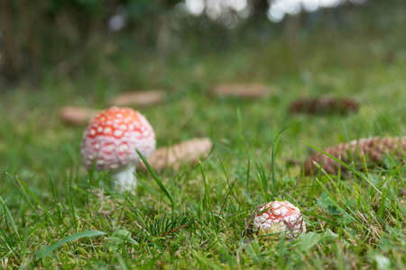 Mushrooms drift out of the moss and meadow in autumn Foto de archivo