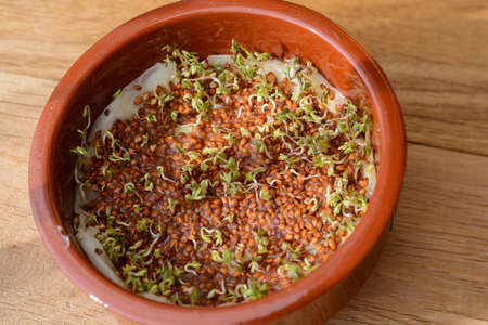 Herbs grown - germinating cress in a bowl Stockfoto