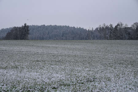 Traces of snow on meadow and forest - snowy winter landscape Stock Photo