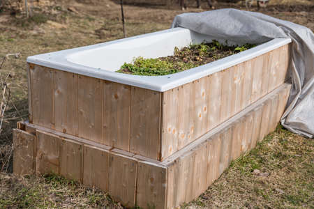 Sustainable bathtub used as a raised bed - spring awakening and upcycling in the garden Standard-Bild