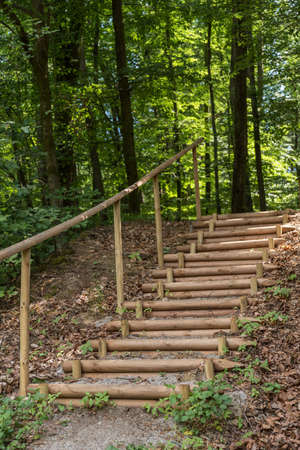 massive forest stairs with wooden steps - staircase in the forest path