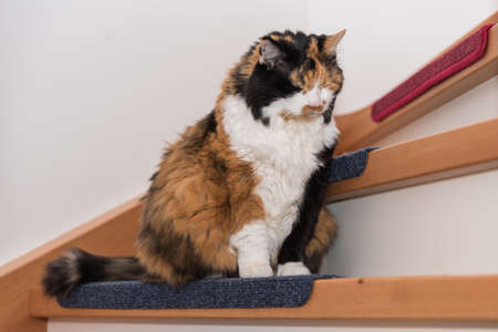 Domestic cat is enjoying sitting on the step in the stairwell Stockfoto