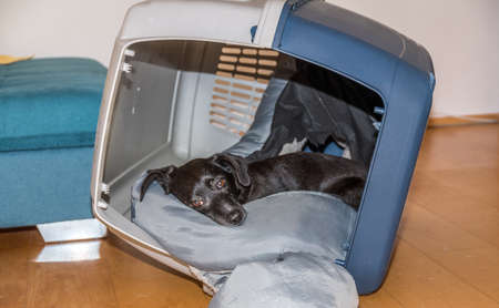black dog lies in an inclined dog carrier