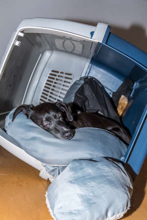black dog lies relaxed in its dog carrier in an inclined position