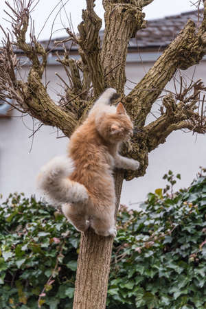 red cat plays and climbs on a tree