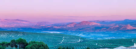 View at sunset of olive tree fields with Cazorla mountains in the background in Baeza village, Jaen, Andalusia, Spain