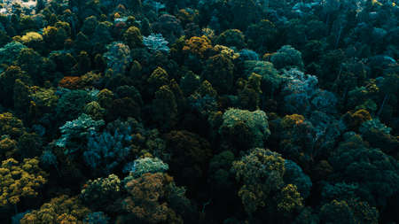 Treetop of a tropical forest in Selangor Malaysia