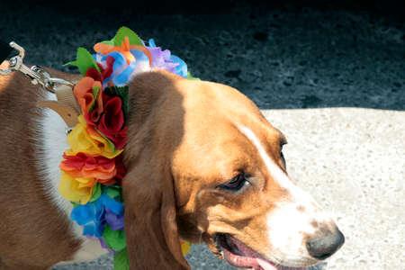 A dog celebrating Pride Parade in 2007 in Toronto, Canada Stock fotó