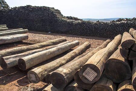 alf: BRASIL, BOTUCATU, SP, 03092008. MADEIRA. Toras de eucalipto recém cortados esperam para serem cortadas em uma serraria de Botucatu, SP – FOTO: ALF RIBEIRO - Freshly cut eucalyptus logs await to be cut at a sawmill in Botucatu, SP