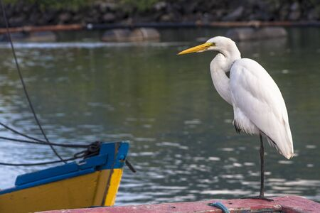 Egret guesthouse in a boat in the fishing port of the mouth of Rio Preto, in Peruibe Stock Photo