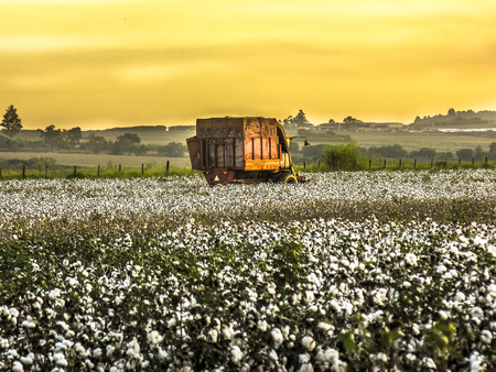 Machanized cotton harvesting in Brazil Stock Photo