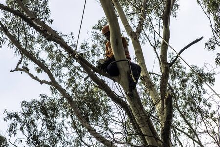 Sao Paulo, SP, Brazil, Octover 11, 2017. Municipality workers take the pruning of tree removal in Manuel Vaz de Toledo Square, in the Vila Mariana neighborhood, south of Sao Paulo