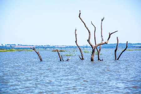 Dead trees with branches and bark standing upright in the water and blue sky in Brazil