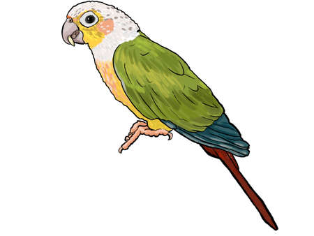 Parrot tropical exotic bird sitting illustration isolated on white background