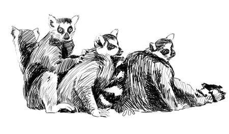 Group of lemurs Pencil sketch, Madagascar