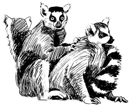 Group of lemurs ink sketch, Madagascar