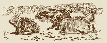 Cows in field dry stone wall paddock Hand drawn sketch