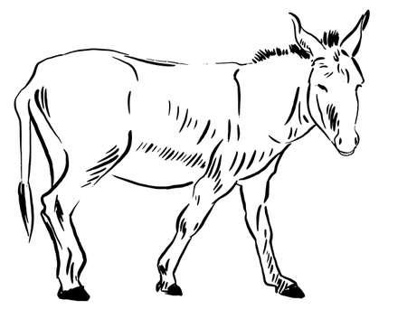 Donkey sketch monochrome vector graphics