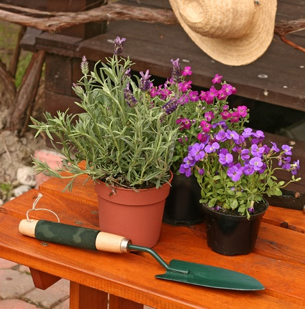 Gardening tools and plants outdoor nature shoot  photo