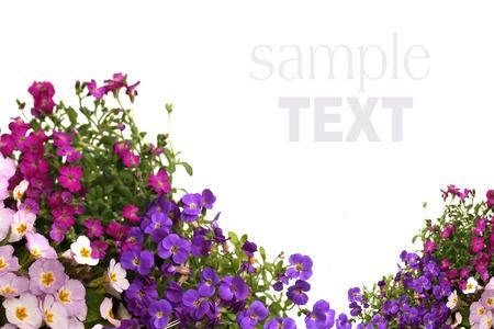 flor silvestre: frontera de flores aisladas sobre fondo blanco